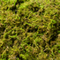 Mountain moss detail